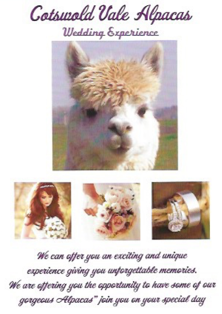 images/advert_images/asain-weddings_files/cotswolds alpacas.png