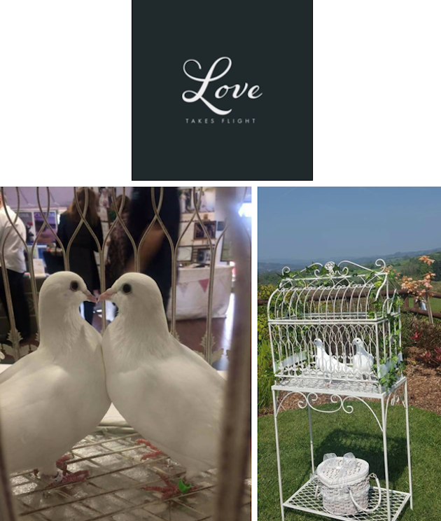 images/advert_images/dove-release_files/love flight.png